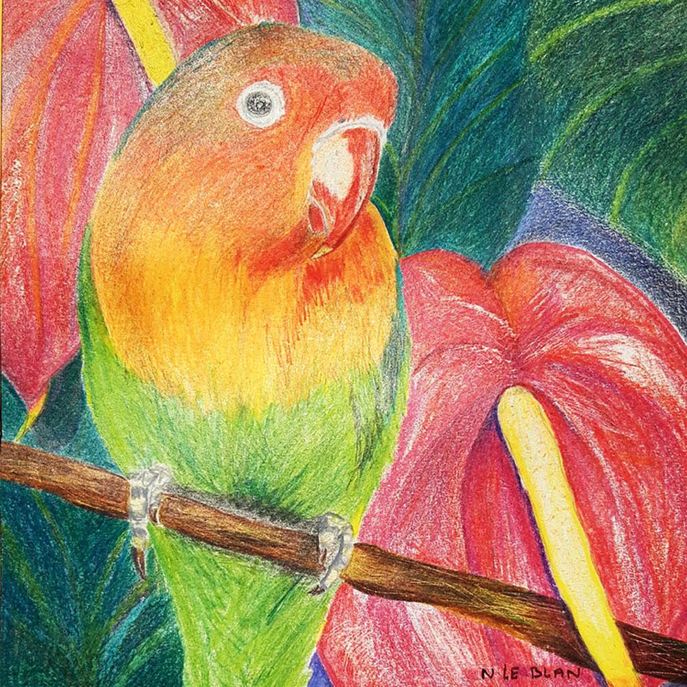 Crayons de couleur sur papier